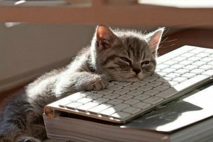 cat-computer3